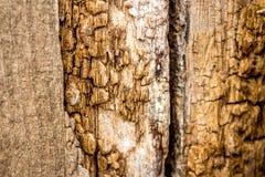 Oude houten textuur - oude houten omheining Royalty-vrije Stock Foto's