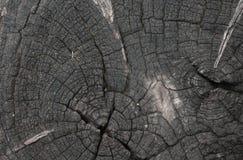 Oude houten textuur van droog Stock Fotografie