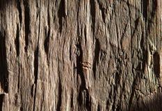 Oude houten textuur voor achtergrond Stock Afbeeldingen