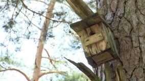 Oude houten vogelhuis nestelen-doos op pijnboomboom in bos stock videobeelden