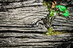 Oude houten weefselachtergrond Royalty-vrije Stock Foto