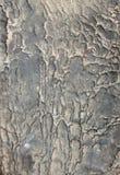Oude huid Stock Foto's