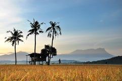 Oude hut, Oude kokosnoot, Oude berg Royalty-vrije Stock Foto's