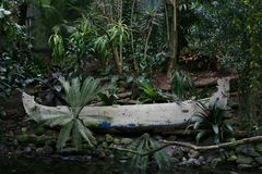 Oude kano in het regen woud. Oude kano in het regen woud te Luttelgeest Orchideeen hoeve in Holland Europa Stock Images
