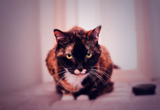 Oude kat Royalty-vrije Stock Foto's