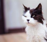 Oude kat met gouden ogen Stock Foto's