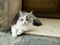 Oude kat op de straat van Florence Stock Afbeelding