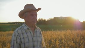 Oude Kaukasische mensenlandbouwer in een gang van de cowboyhoed op een gebied van tarwe bij zonsondergang stock footage