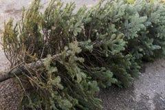 Oude Kerstmisboom Stock Afbeelding