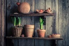 Oude kleipotten en de lenteinstallaties op houten plank stock fotografie