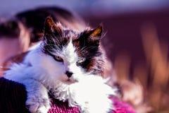 Oude knorrige kat op schoudermens Stock Afbeeldingen