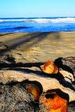 Oude kokosnoten Royalty-vrije Stock Foto's