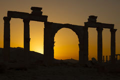 Oude kolommen - Palmyra Stock Fotografie