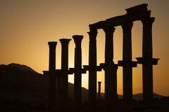 Oude kolommen - Palmyra Stock Foto