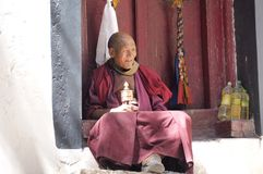 Oude Lama Stock Afbeeldingen
