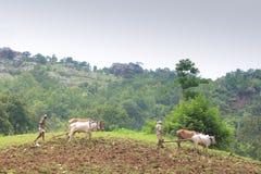 Oude landbouw, India royalty-vrije stock afbeelding