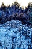 Oude Landbouwbedrijfomheining In een Sneeuw Behandeld Gebied in Vroeg Licht royalty-vrije stock foto