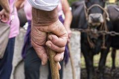 Oude landbouwershand die een stok houden Royalty-vrije Stock Afbeelding