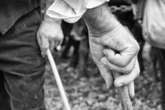 Oude landbouwershand die een stok in zwart-wit houden Stock Fotografie