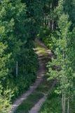 Oude landweg in bos Stock Foto