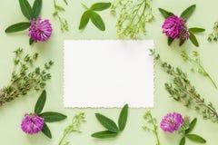 Oude lege foto voor de binnenkant en het kader van kruiden en bloemen Stock Fotografie