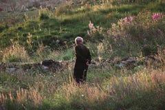 Oude mens in Alpiene weiden Stock Afbeelding