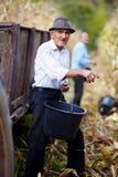 Oude mens die bij graanoogst een emmer houden Stock Foto's