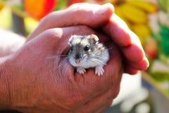 Oude mens die de hamster houden royalty-vrije stock afbeelding