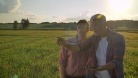 Oude mens die nieuw project met volwassen zoon plannen, en op tarwegebied vooruit verklaren richten, landbouwer met zijn opvolger stock videobeelden