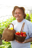 oude mens geplukte groenten Stock Fotografie