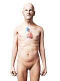 Oude mens - hart Stock Afbeelding