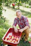 Oude mens met Apple in de Apple-Boomgaard Royalty-vrije Stock Fotografie