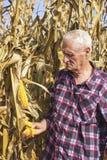Oude mens met graan in zijn hand Royalty-vrije Stock Foto's