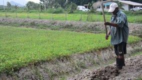 Oude mensen gravende grond bij reden tot het planten van boom en het kweken van groente bij tuin stock videobeelden
