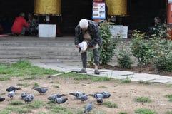 Oude mensen voedende duiven in bhutan Stock Afbeeldingen