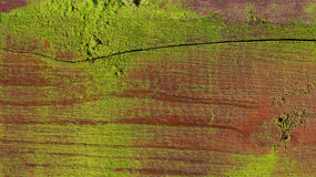Oude mos bosrijke achtergrond Stock Foto