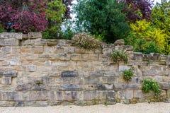 Oude muur en multicolored vegetatie Royalty-vrije Stock Afbeelding