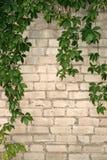 Oude muur met bladeren Stock Afbeeldingen