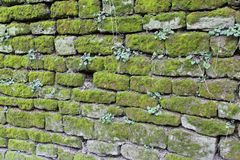Oude muur met mos - detail Royalty-vrije Stock Afbeelding