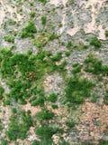 Oude muur met mos royalty-vrije stock fotografie