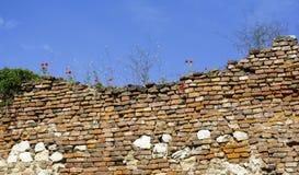 Oude muur met papaverbloemen Stock Afbeeldingen