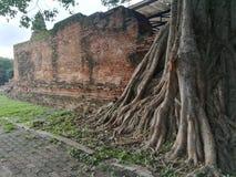 Oude muur in tmple Stock Foto
