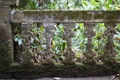 Oude muurruïnes in regenwoud Royalty-vrije Stock Afbeelding