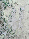 Oude muurtextuur Stock Fotografie