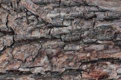 Oude natuurlijke houten sjofele dichte omhooggaande, oude houten achtergrond als achtergrond, textuur van schors houten gebruik a Royalty-vrije Stock Fotografie