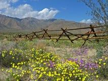 Oude omheining, woestijnwildflowers stock afbeeldingen