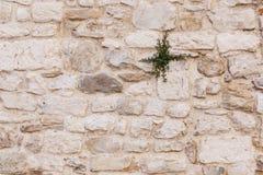 Oude oude bakstenen muur grunge textuur Stock Afbeelding