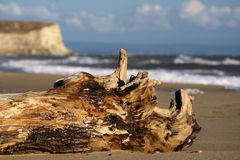Oude oude boom. Royalty-vrije Stock Afbeelding