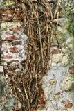 Oude oude muur met de achtergrond van de wortelstextuur Royalty-vrije Stock Foto