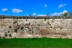 Oude overwoekerde muur Royalty-vrije Stock Foto's